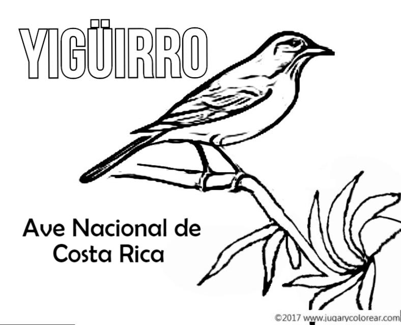 Colorear Símbolos Patrios De Costa Rica