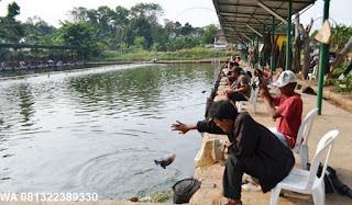 Umpan Serbuk Ikan Mas Di Kolam Pemancingan