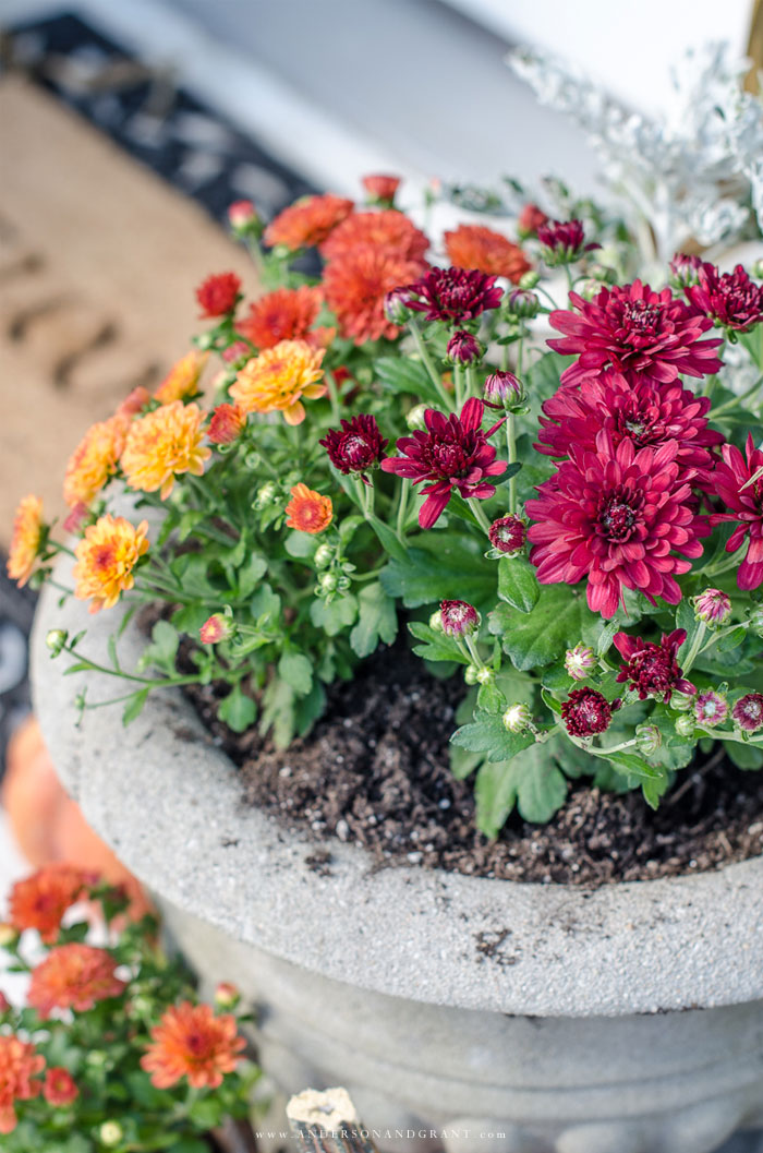 See how to transform your porch for fall using pumpkins, mums, and cornstalks.     www.andersonandgrant.com