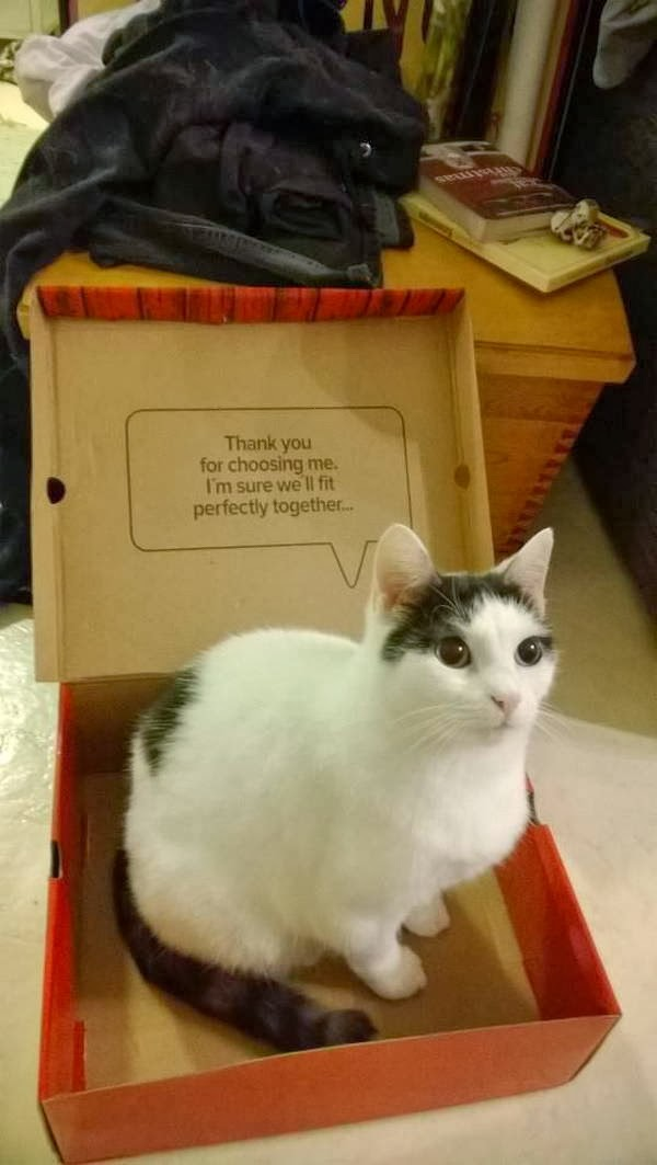 Funny cats - part 88 (40 pics + 10 gifs), cat sits on shoes box