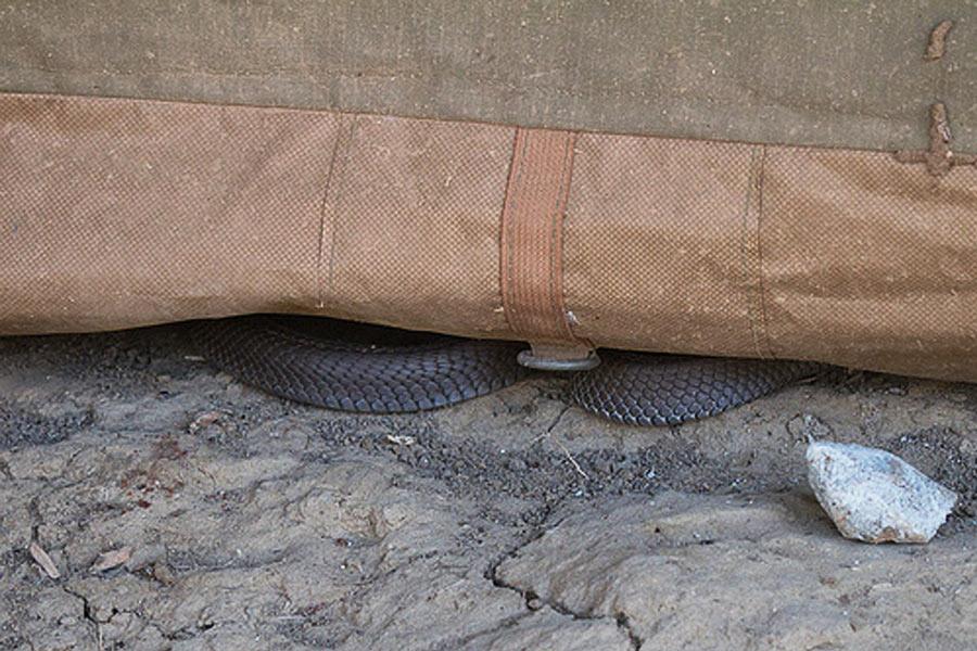 ular di dalam tenda