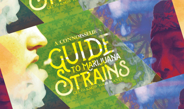 A Connoisseur's Guide to Knowing Marijuana Strains