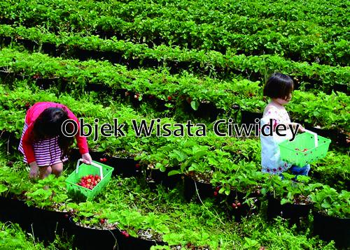 Objek Wisata Paling Menarik di Ciwidey Jawa Barat