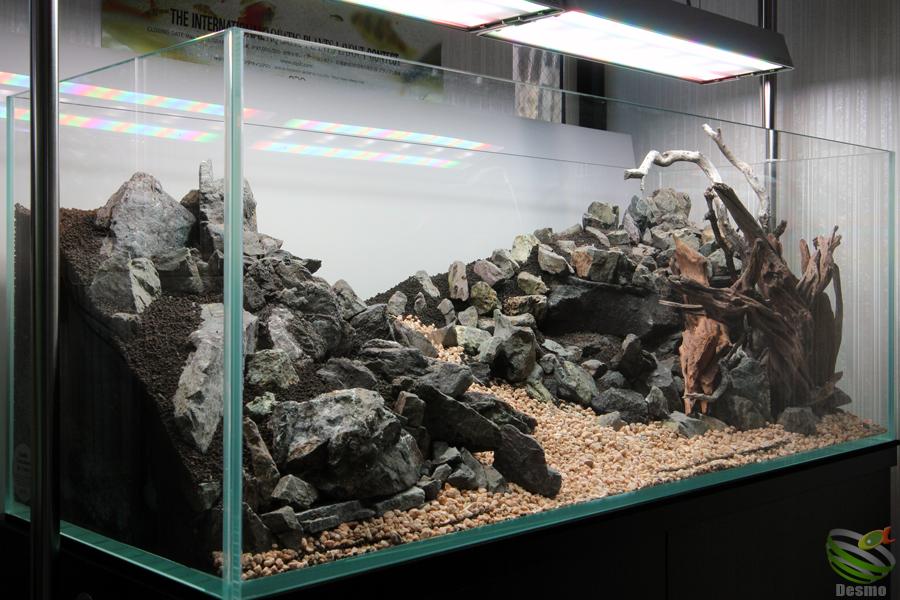 レイアウト水槽2015