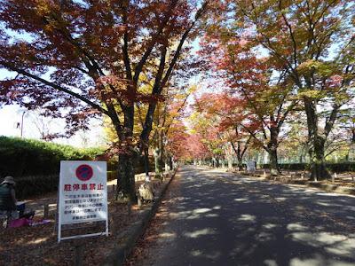 【京都府】京都府立植物園 けやき並木