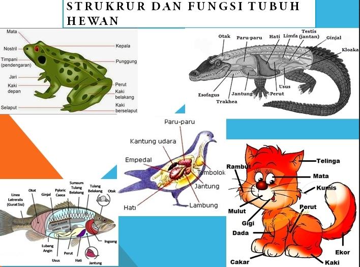 51 Koleksi Gambar Hewan Vertebrata Dan Organ Geraknya Terbaik