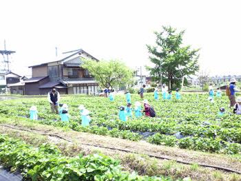 近江舞子いちご園