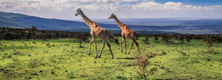 Tops 10 des activités à Arusha