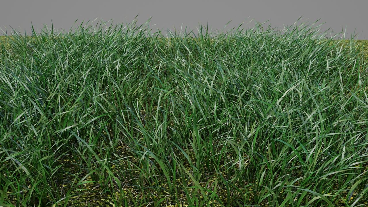 Robert Poole: Realistic Grass Test