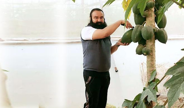 ram-rahim-sold-expensive-vegetables-one-papaya-for-rs-5000-and-one-chilly-for-rs-1000