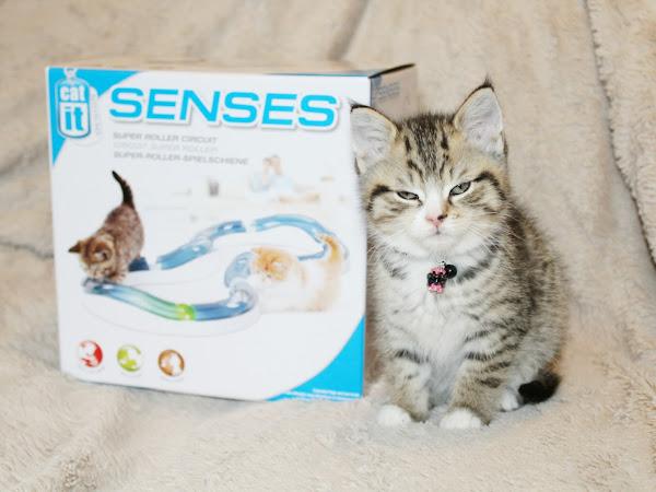 Catit Senses Circuit