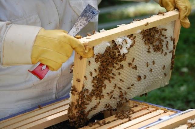 Πωλείται μέλι ανάμεικτο (ανθέων με κουμάρια) άριστης ποιότητας σε δοχεία των 27 κιλών