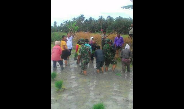 Personil Koramil 10 / Sei Kepayang Laksanakan Penanaman Padi di Desa Perbaungan