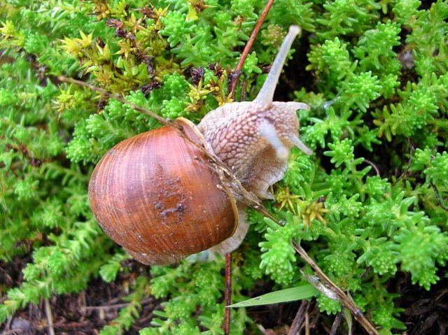 fauna, rośliny, ślimaki, muszla