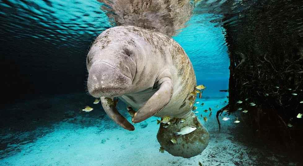 10 Criaturas Mitológicas Que Realmente Existiram (Mais ou Menos)