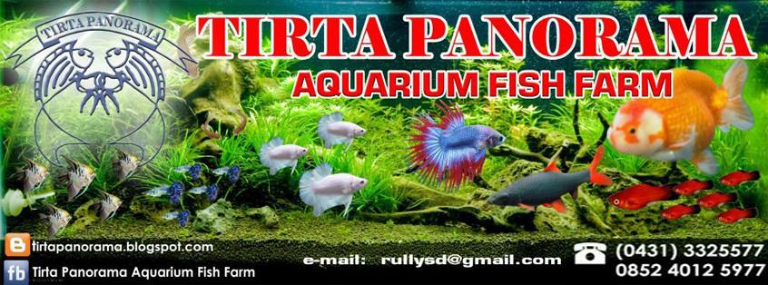 Contoh Spanduk Jual Beli Ikan - desain banner kekinian