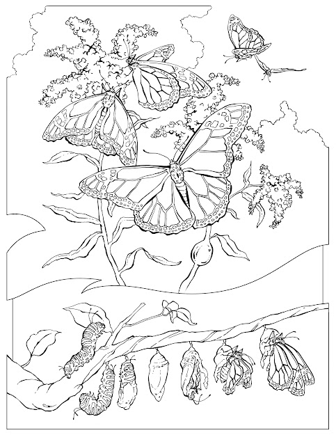 Monarch Butterfly Coloring Pages With