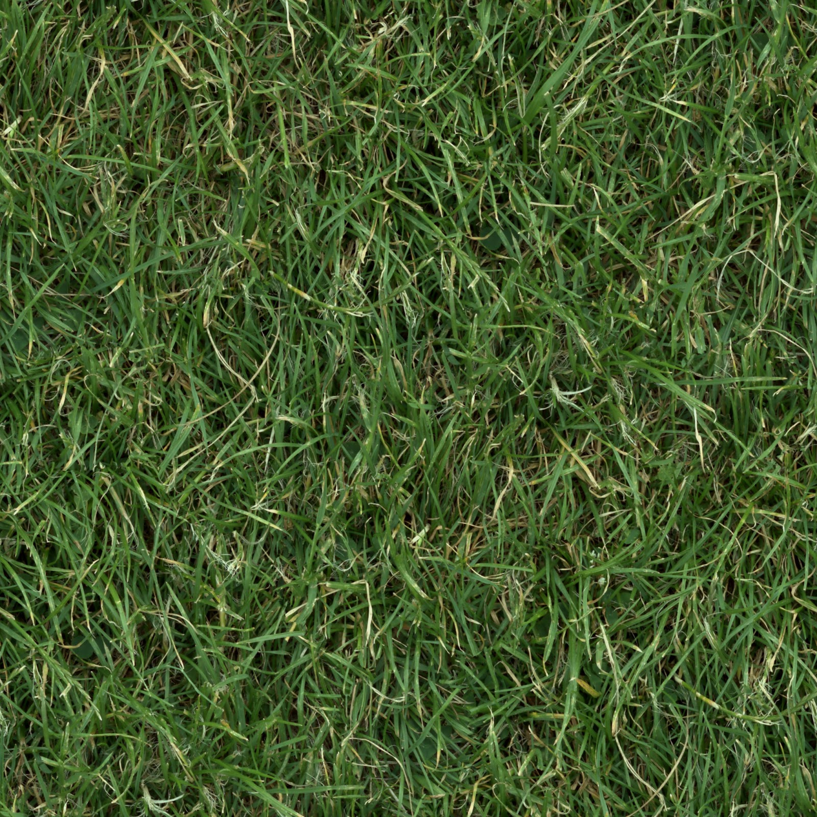 (GRASS 3) turf lawn green ground field seamless texture 2048x2048