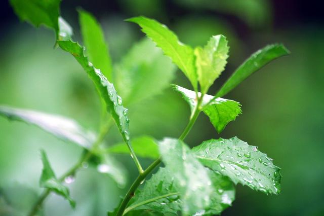 Tumbuhan paling ampuh hilangkan bau badan
