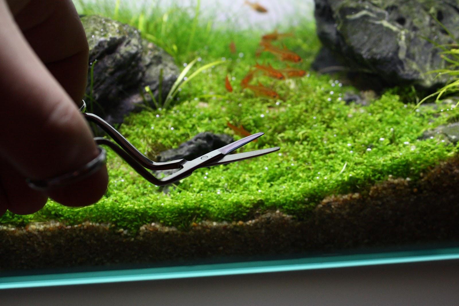 kleine pflanzen schere f r nano aquarien technik. Black Bedroom Furniture Sets. Home Design Ideas