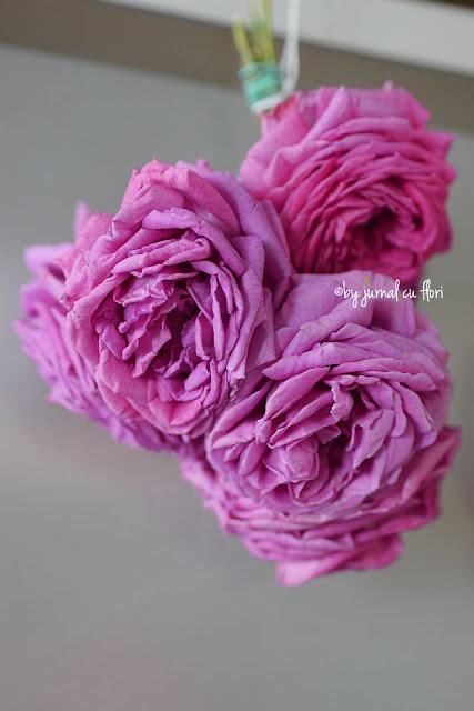 trandafiri pusi la uscat
