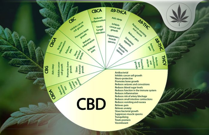 Organic Cannabidiol CBD Factory Outlet - shop online and save