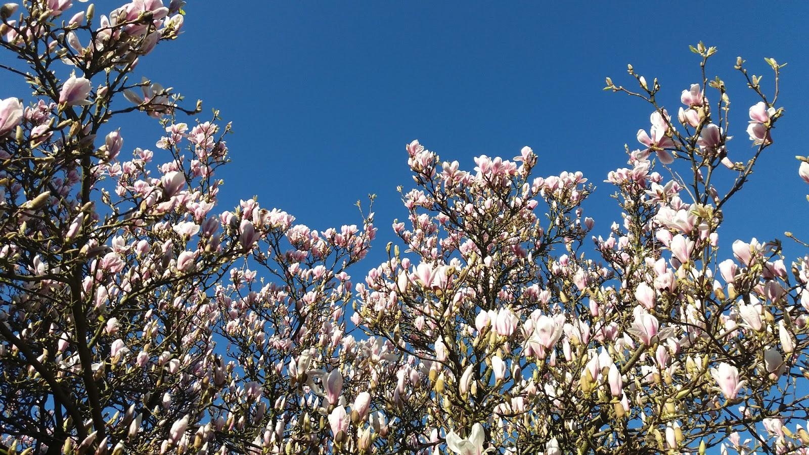 Eexterhout kyroushka 39 s bloementuin for Www bloem en tuin nl