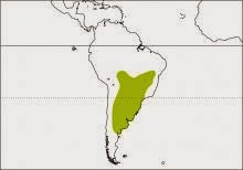 argentinian birds