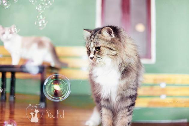 Bong bóng, mèo và tôi
