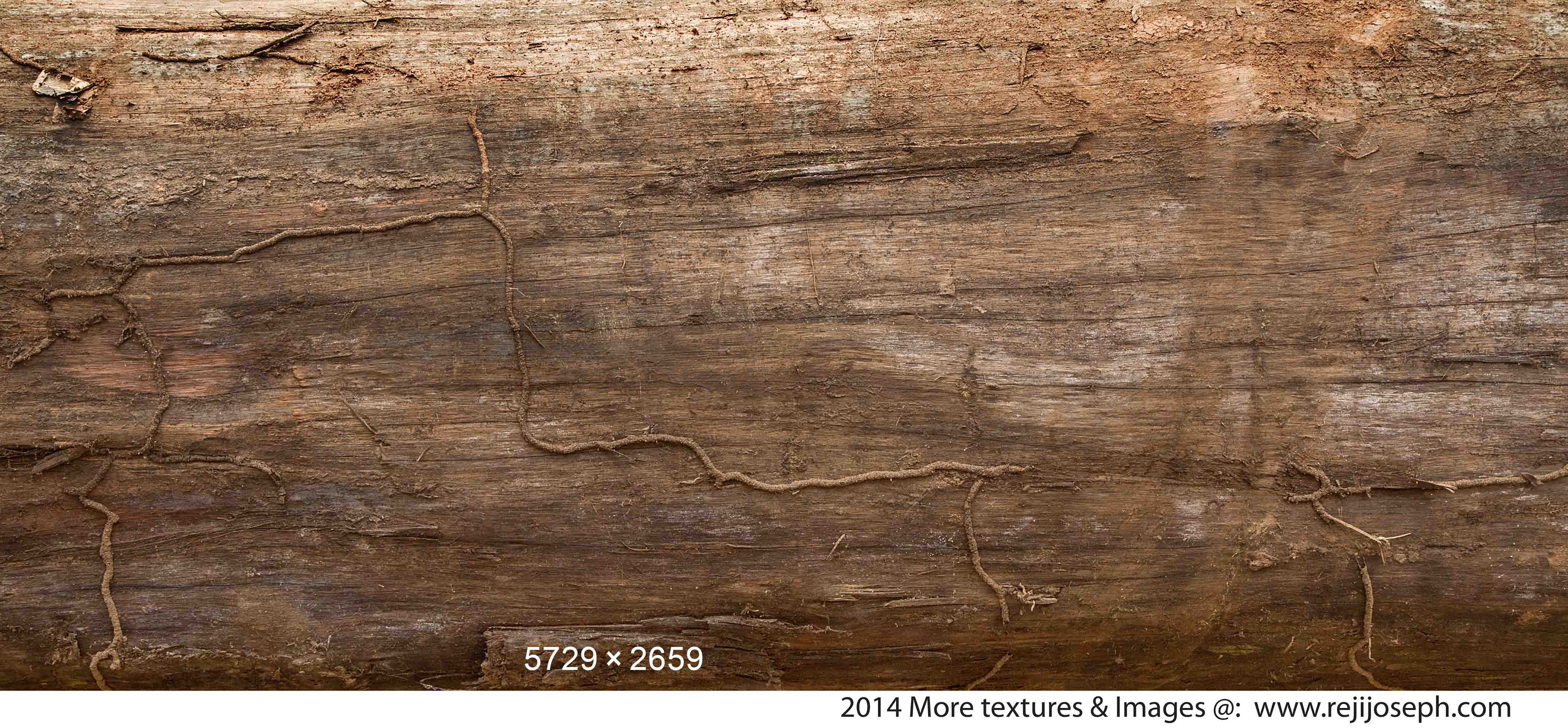Old Wood texture 00003