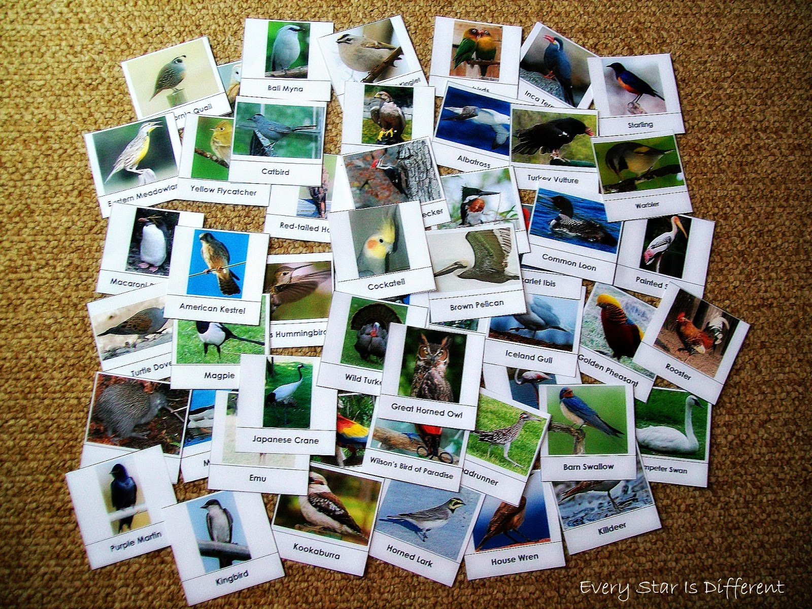Birds Around the World Sorting Activity (Free Printable)