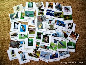 Birds Around the World Sorting Activity (Free Printable)