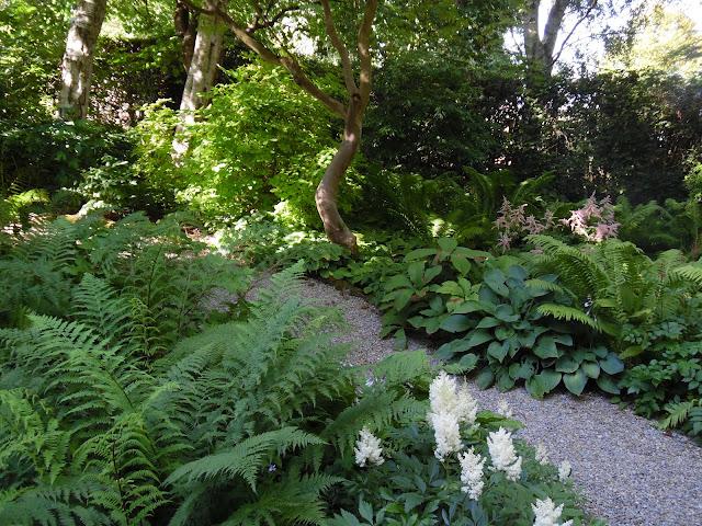 cienisty ogród, żwirowa ścieżka