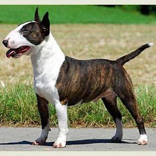 Morsorosso Lista Cani
