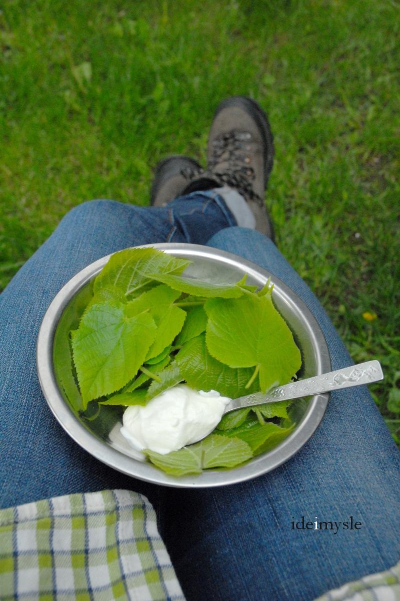 sałatka z liści lipy, mizeria ze śmietaną, liście lipy jadalne, tilia cordata, dzikie rośliny jadalne