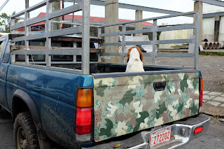Dog in back of truck in Puriscal.