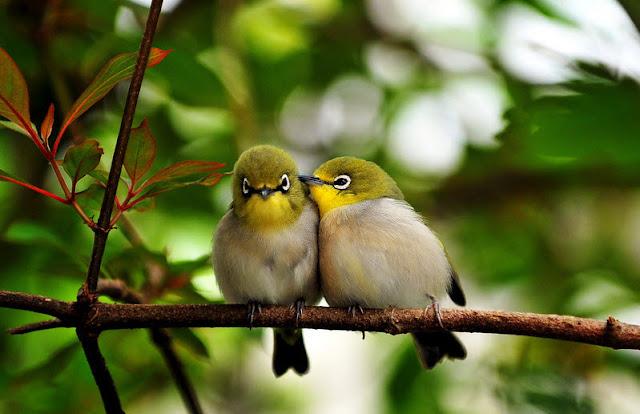 المغازلة والتناسل عند الطيور