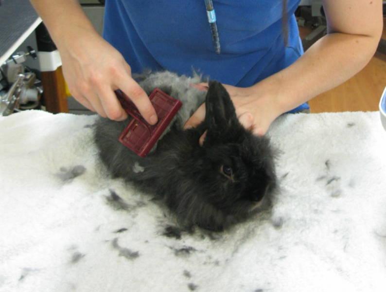 AYO TANDUR: cara memandikan kelinci