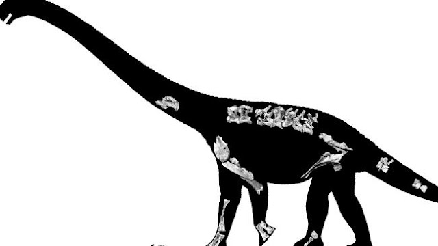 Long-necked dino species discovered in Australia