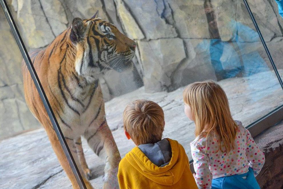 Children stare at a Tiger at the Jacksonville Zoo