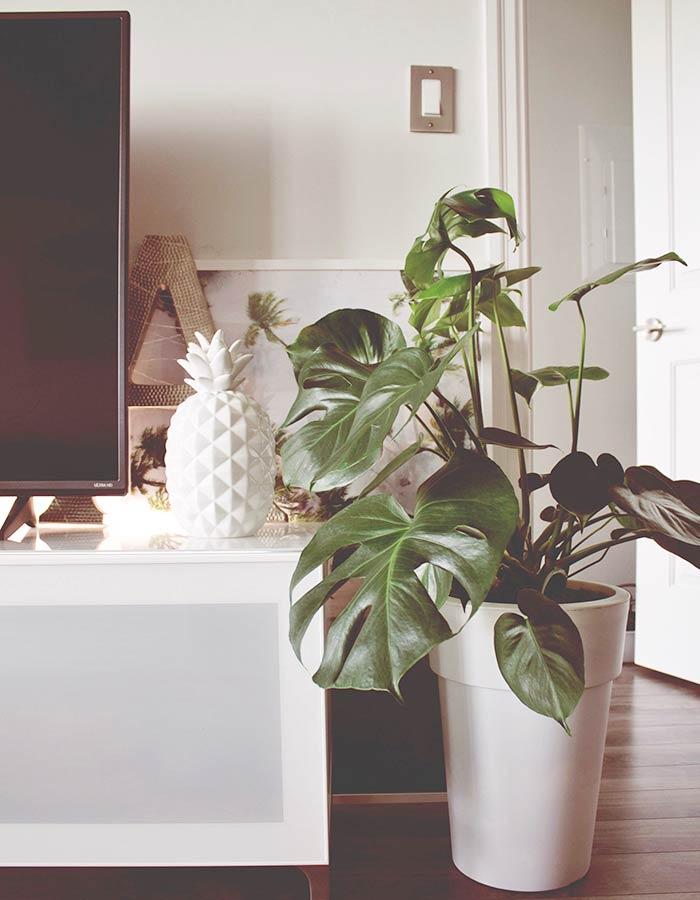 Monstera deliciosa (costela de Adão) na decoração da sala de estar, deixando o ambiente mais aconchegante e estiloso.