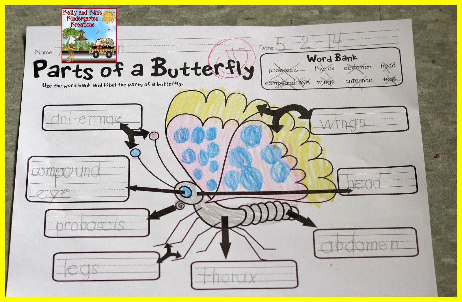 Kelly And Kim S Kindergarten Kreations Butterflies Free