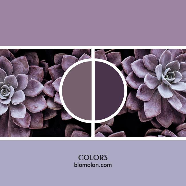 variedad_en_color_color_7