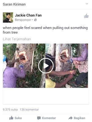 Video Palsu