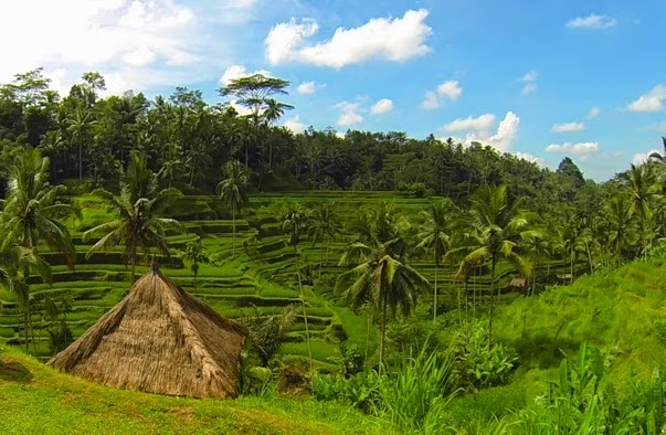 Ubud (Gianyar, Bali, Indonesia) has a natural beauty that is very beautiful.