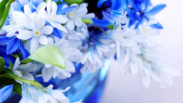Pictures Of Pretty Blue Flowers