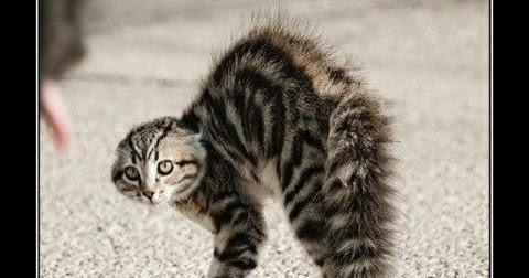 Cute and Funny Pictures and more: Scared cat doing the ...