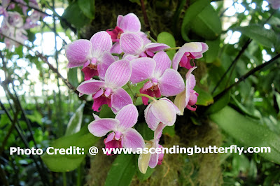 Enid Haupt Conservatory, The New York Botanical Gardens, Orchid, Orchids, Flowers