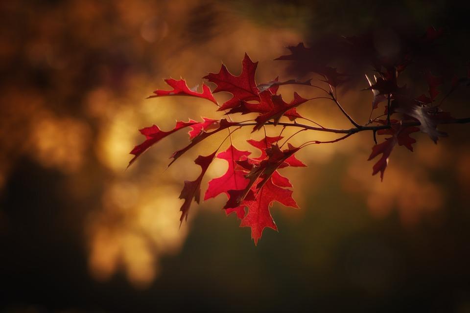 Mes petits plaisirs de l'automne