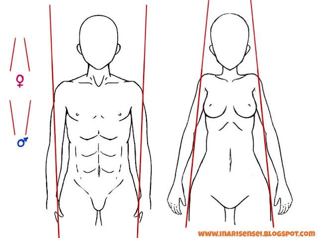 Différences entre les épaules et le bassin des hommes et des femmes